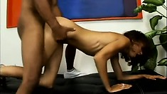 The ebony cutie screams with pleasure as that black prick invades her twat from behind
